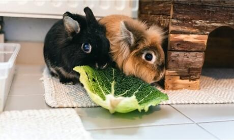 Whether dwarf rabbits or larger animals: Regensburg's landlords are supposedly not particularly animal-friendly.